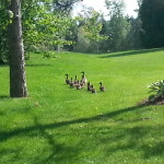 Scenery - One of the many families in Sunset Lakes!